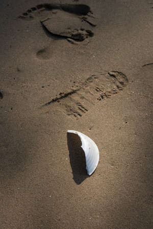 White foam cup found left on the beach. A starting point of the environment problem. 写真素材 - 119881088