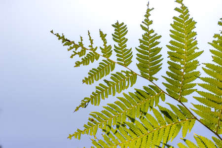 ferns: Branch of ferns with sky