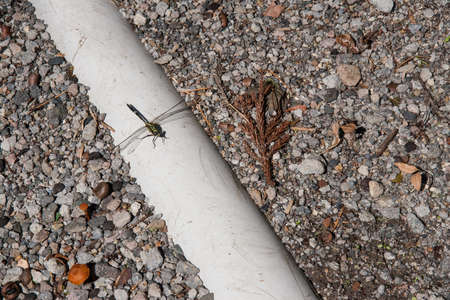 appendages: Dragonfly on pipe