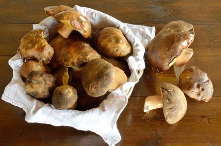Forest-picked edible, mushrooms in basket and in wooden table Stock Photo