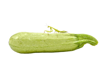 Mantis standing on a squash Stock Photo