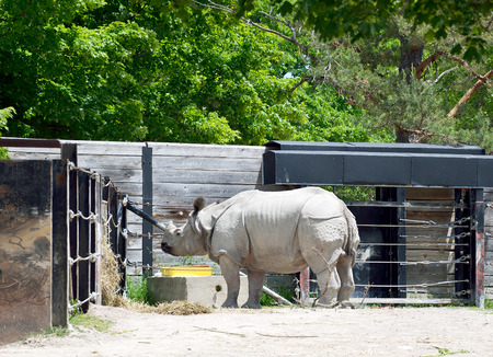 Male greater one-horned rhino in housing facilities of a zoo Stock fotó