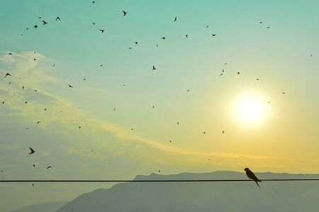 Morning scene with silhouette of swallow standing on a wire and other swallows flying against the sky Stock Photo