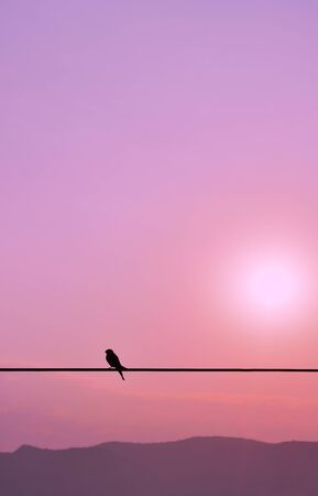 Silhouette of single swallow standing on a wire at the sunset Reklamní fotografie