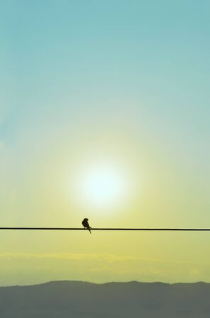 Silhouette of swallow standing on a wire at the morning September sun