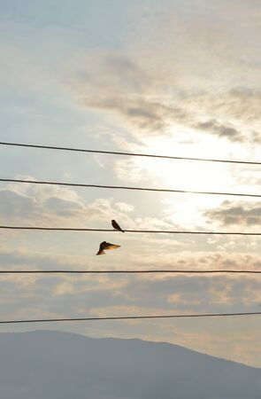 Silhouettes of swallows one flying and the other standing on a wire a cloudy September day Reklamní fotografie