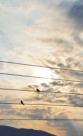 Silhouettes of swallows on a wires a  September morning with beautiful dramatic sky