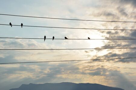 Silhouettes of swallows standing on a wire a cloudy September day Reklamní fotografie