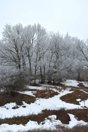 Winter landscape with snow-covered trees