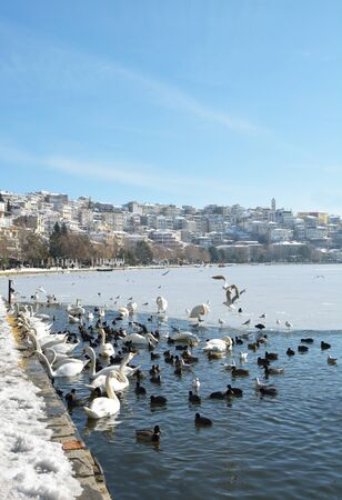 Birds in half frozen lake and town of Kastoria in Greece as background