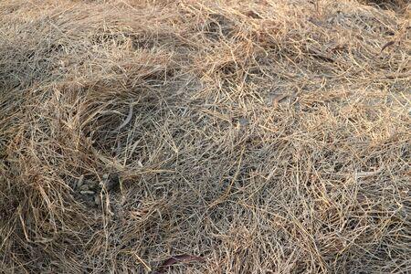 prespective: Dry grass