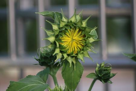 Flower with blur back ground
