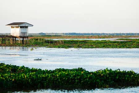 Thale Noi Waterfowl Reserve photo