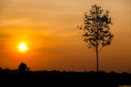 Silhouette Tree on Meadow Landscape Sunset Stock Photo