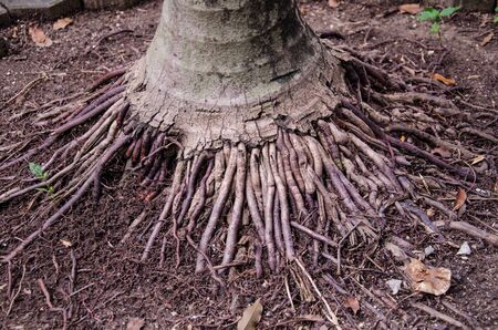 roots tree photo