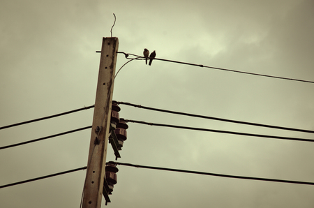 Bird on power poles photo