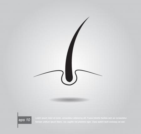 follicle: la piel de pelo capa de ilustraci�n vectorial