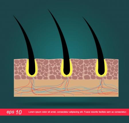 hud hår ikon Illustration