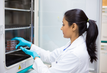 Closeup portrait, young lab researcher holding tissue culture dishes in incubator. Isolated lab  스톡 콘텐츠