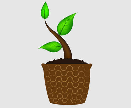 Young plant in pot isolated on the white backgrounds - vector Stock Vector - 17603963
