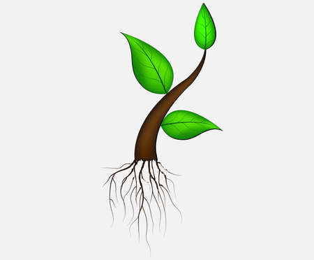 illustration of plant sapling growing on abstract background