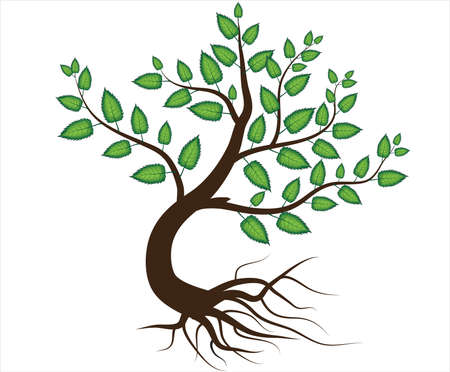 olive tree: Abstract vector tree with root Illustration