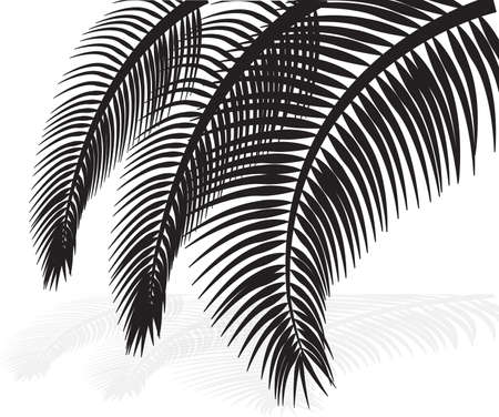 palm leaves on white background  Vector illustration  Stock Vector - 21637822