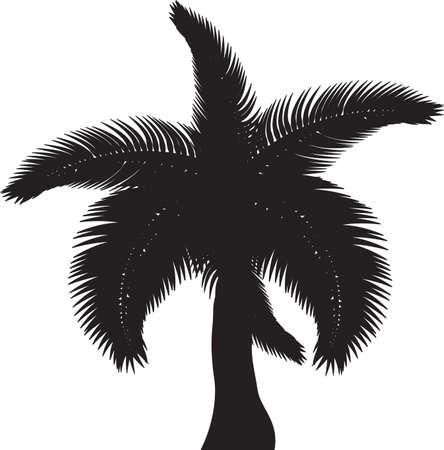 carribean: Palmeras tropicales, siluetas y contornos negros contorno sobre fondo blanco Vector