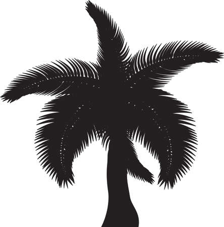 Tropical palm trees, black silhouettes and outline contours on white background  Vector