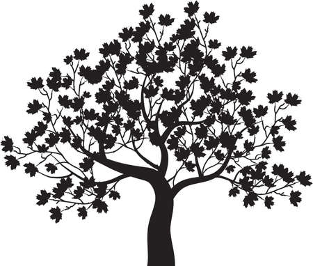 단풍 나무 - 벡터 일러스트