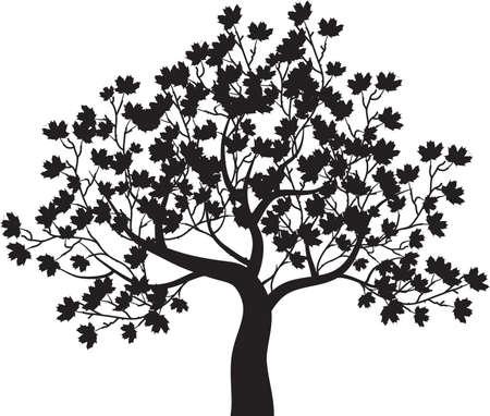 Autumn maple tree - vector Zdjęcie Seryjne - 21637843