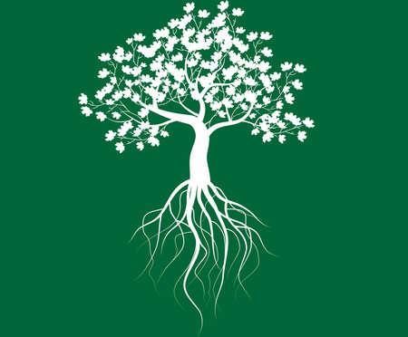 bomen zwart wit: geheel witte boom met wortels geïsoleerde groene achtergrond vector