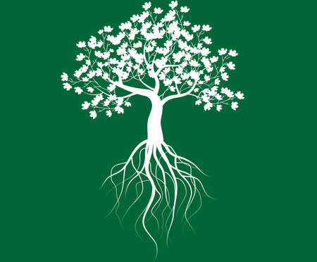 whole white tree with roots isolated green background vector Vector