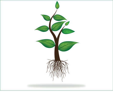 illustration of plant sapling With roots growing on abstract background Vector