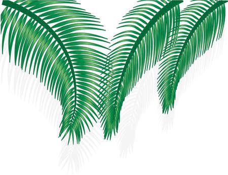 Green palm tree on white background Çizim