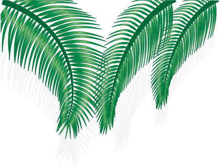 Green palm tree on white background Illustration