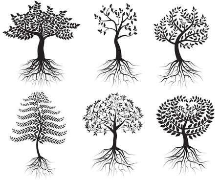 arbre automne: Collecte des arbres avec des racines