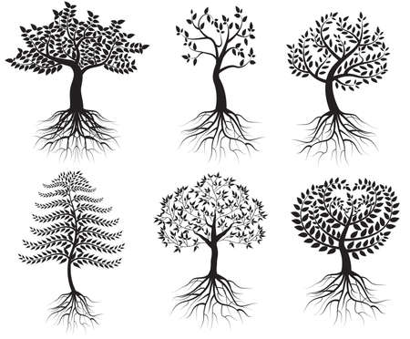 tree drawing: Collection of trees with roots