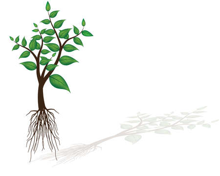 Young seedling Иллюстрация