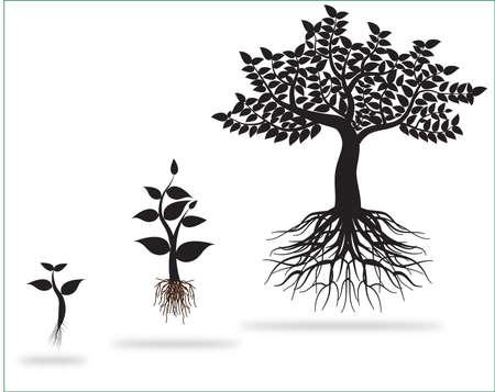 tree roots: árbol 0221 Vectores