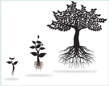 sapling: tree 0221