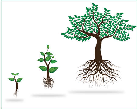 Proceso de vida de la planta joven en el fondo blanco Ilustración de vector