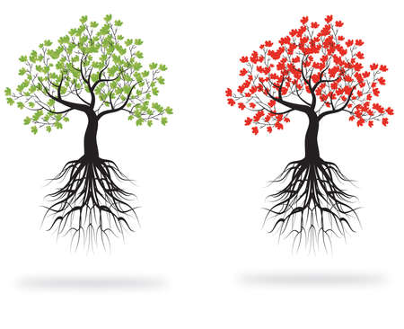 genealogical tree: whole green and red tree with roots isolated white background