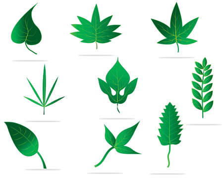 vegetate: Set of green leaves design elements  This image is a vector illustration
