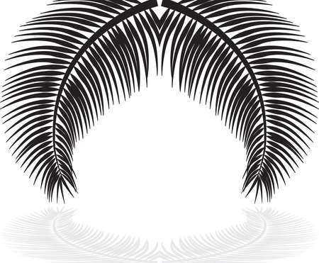 palm leaves on white background. Vector illustration. Stock Vector - 29378086