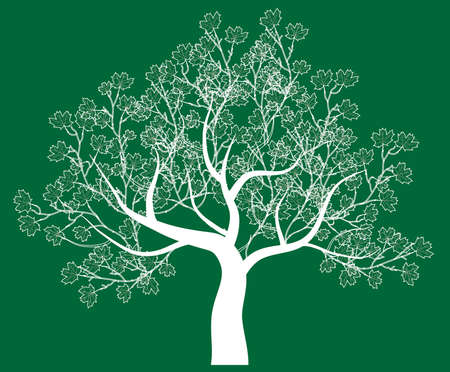 vector drawing of the tree - detailed vector Vector
