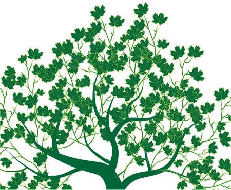 ébredés: Absztrakt tavaszi fa vektoros illusztráció