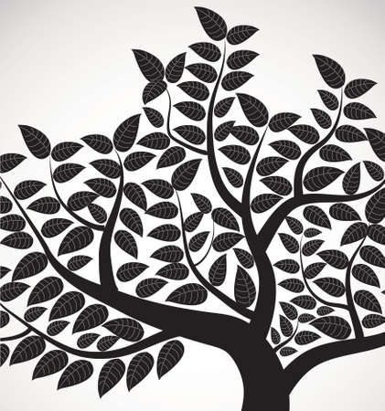 beech tree beech: vector drawing of the tree Illustration