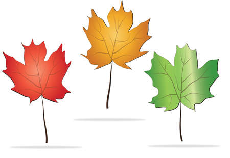 Beautiful autumn leaves maple, linden isolated on white background Vector