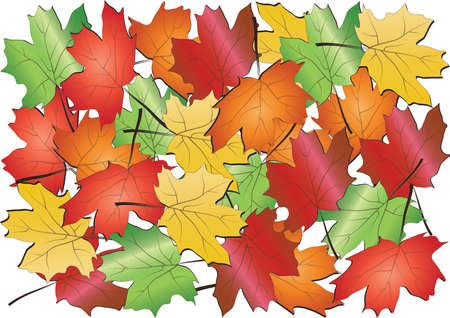 Maple leaves background,vector Vector